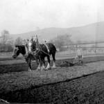 Ploughing at Tynribbie