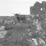 Castle Shuna 1882