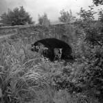 Old Tynribbie bridge